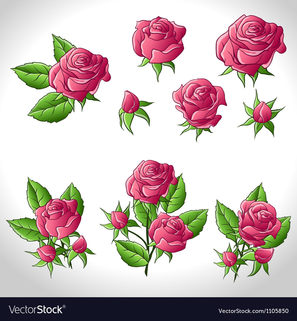 Big set of a beautiful colored roses vector