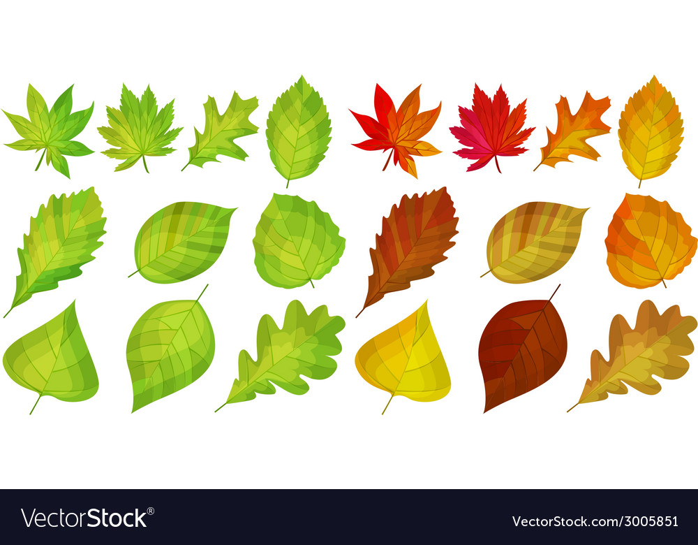 Set with different autumn leaves vector | Price: 1 Credit (USD $1)
