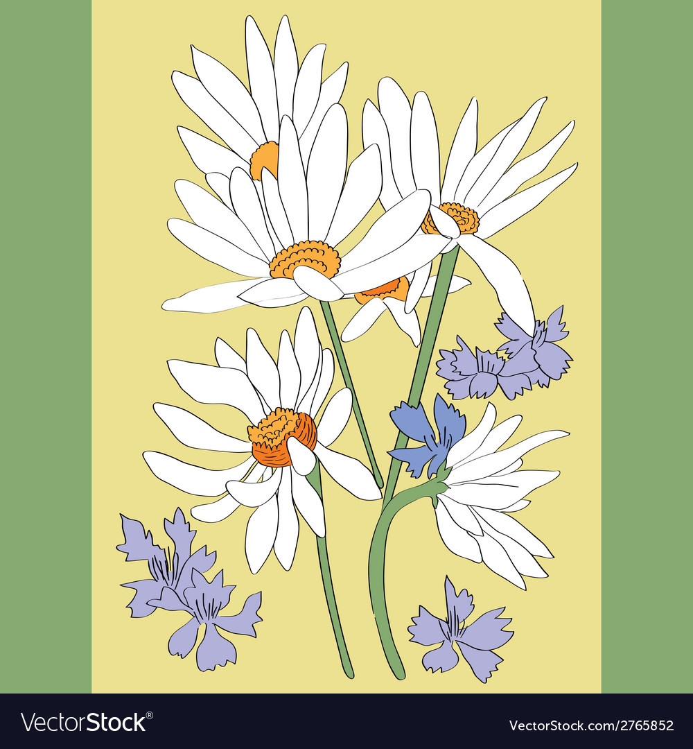 Daisies card vector | Price: 1 Credit (USD $1)