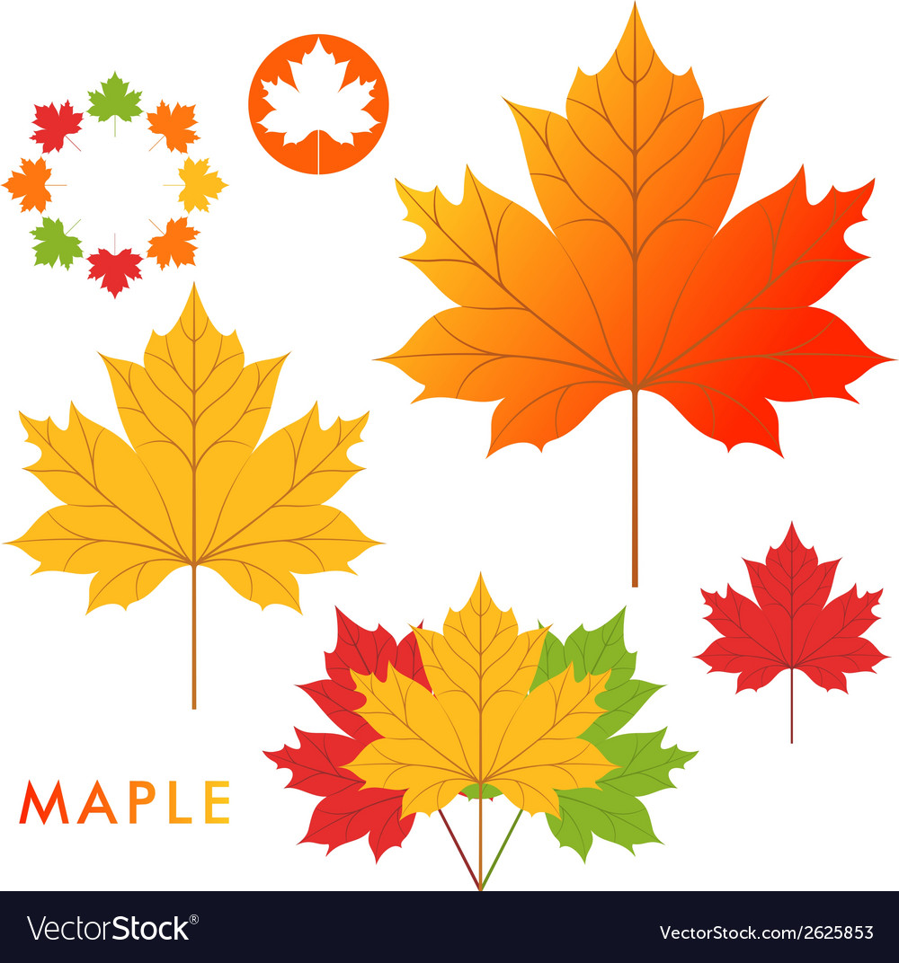 Maple vector   Price: 1 Credit (USD $1)