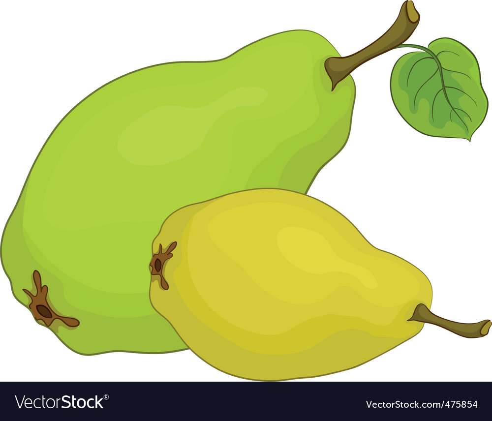 Fruit pears vector | Price: 1 Credit (USD $1)