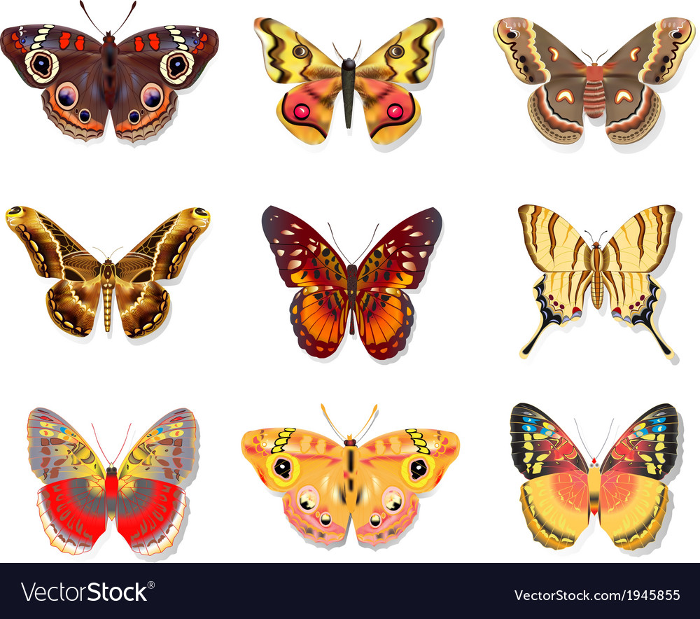 Set beautiful butterfly vector | Price: 1 Credit (USD $1)