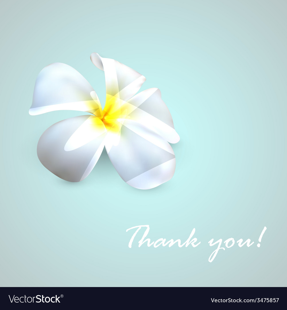 Background with exotic frangipani flower thank you vector | Price: 1 Credit (USD $1)