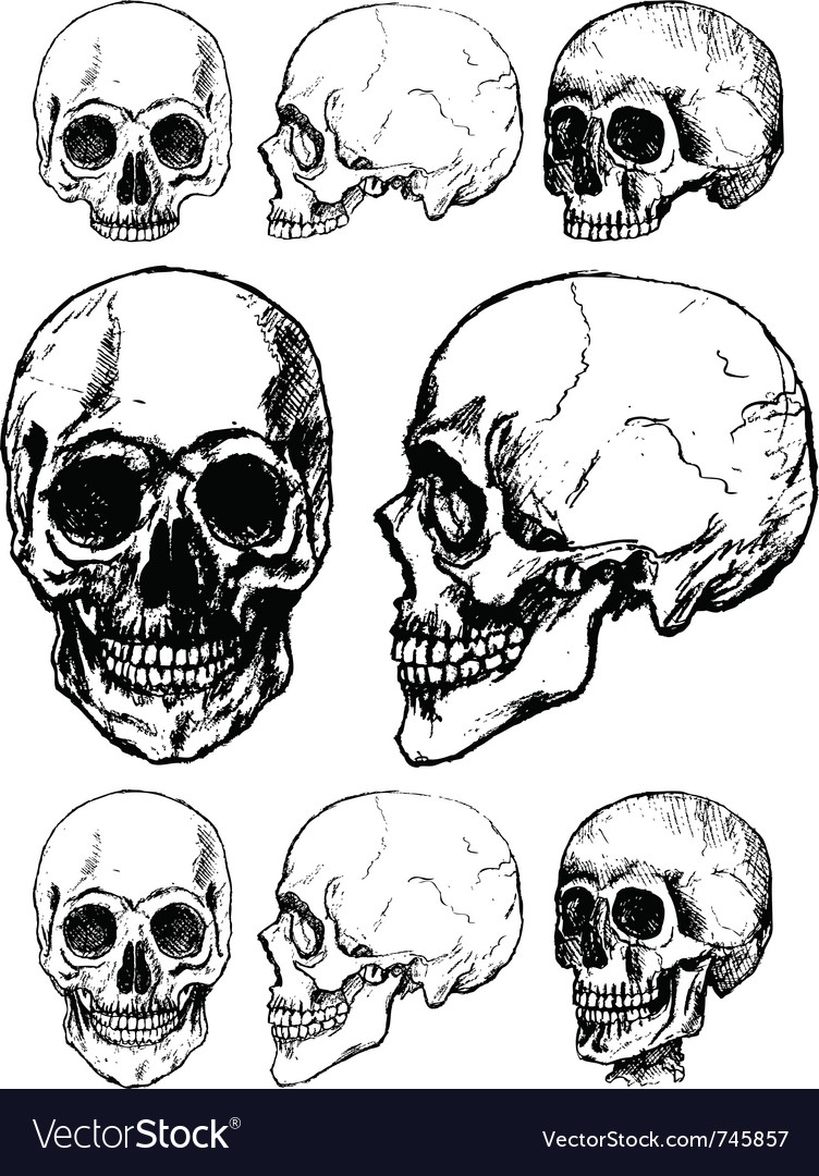 Skull design vector | Price: 1 Credit (USD $1)