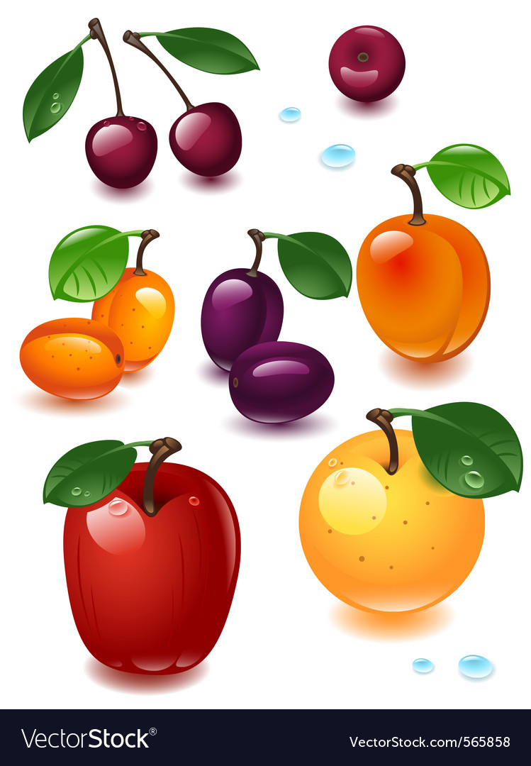 Collection fruit vector | Price: 3 Credit (USD $3)