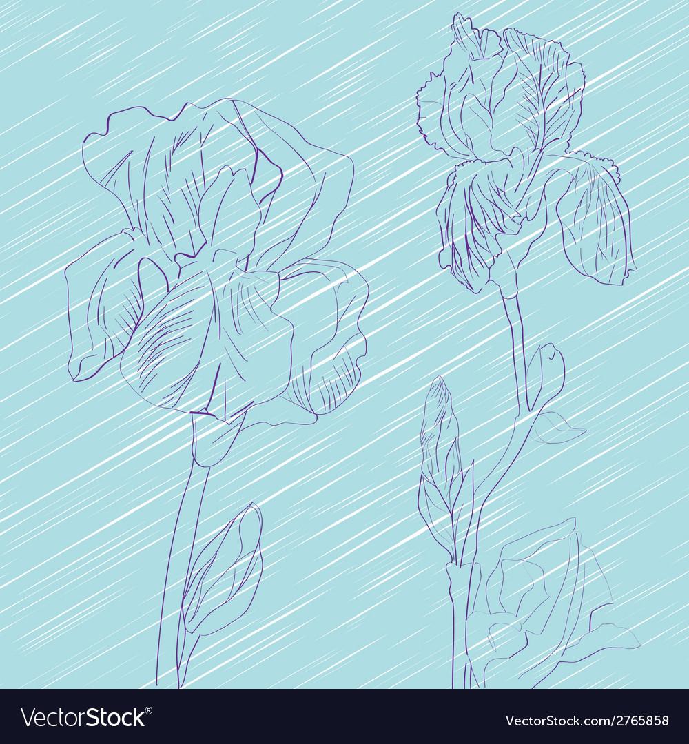 Iris flowers tile vector | Price: 1 Credit (USD $1)