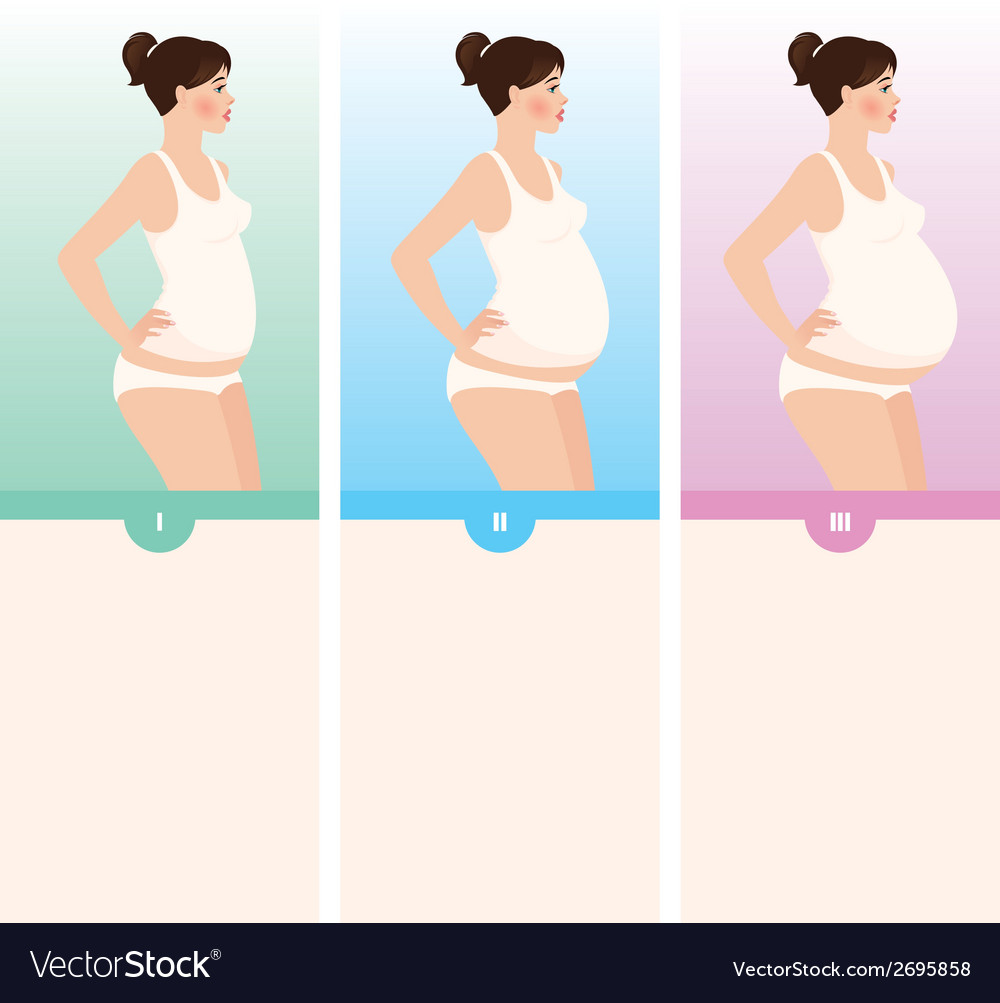 Three trimesters of pregnancy vector | Price: 1 Credit (USD $1)