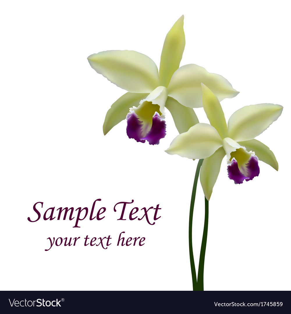 Orchid flower vector | Price: 1 Credit (USD $1)