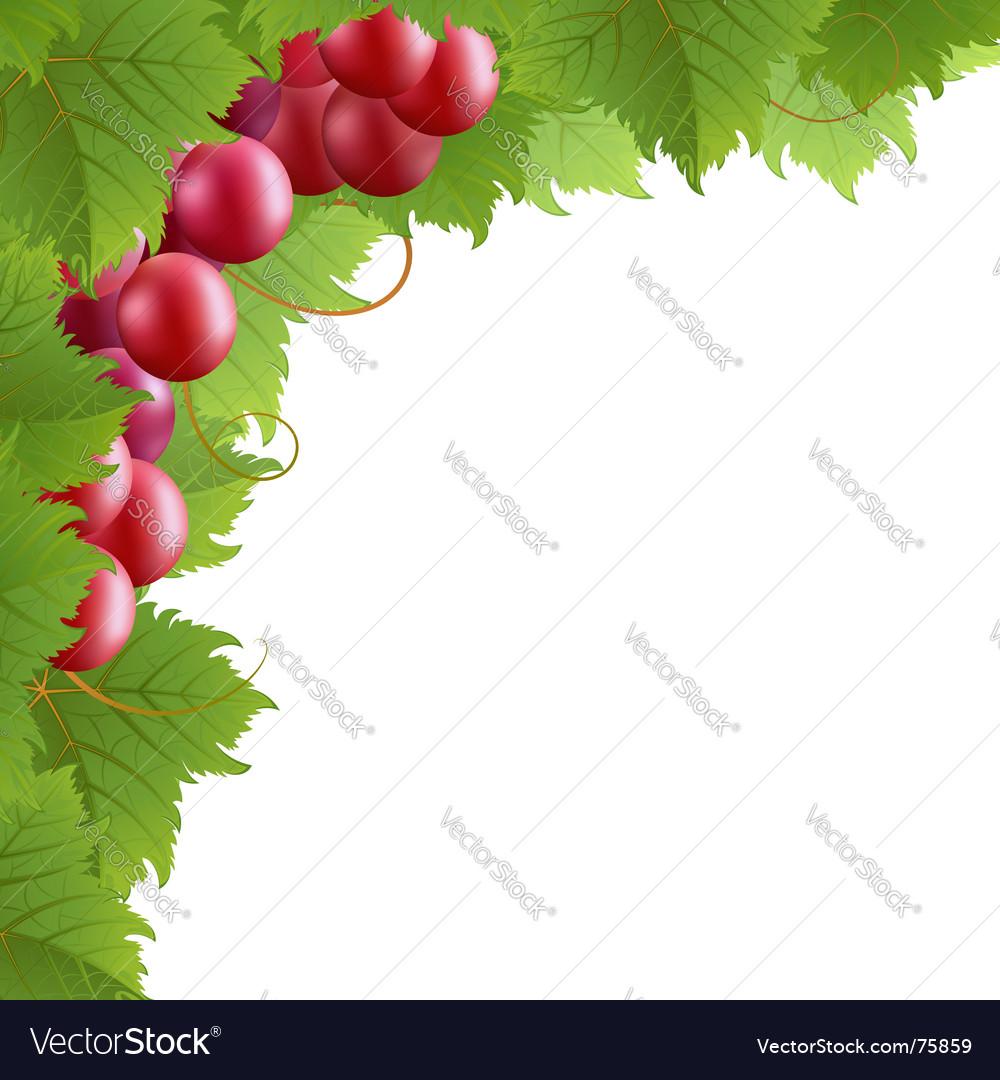 Vine vector   Price: 1 Credit (USD $1)
