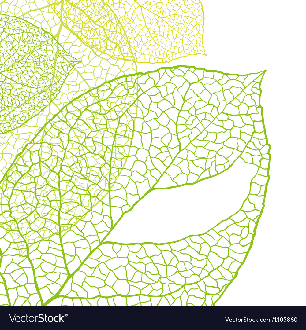 Fresh green leaves background - vector | Price: 1 Credit (USD $1)