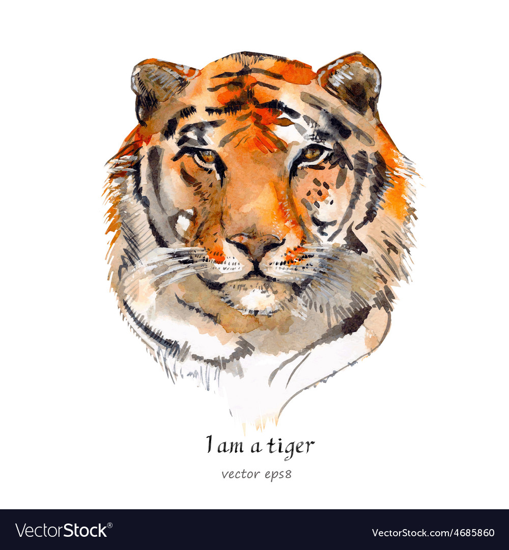 Portrait of a tiger watercolor vector | Price: 3 Credit (USD $3)