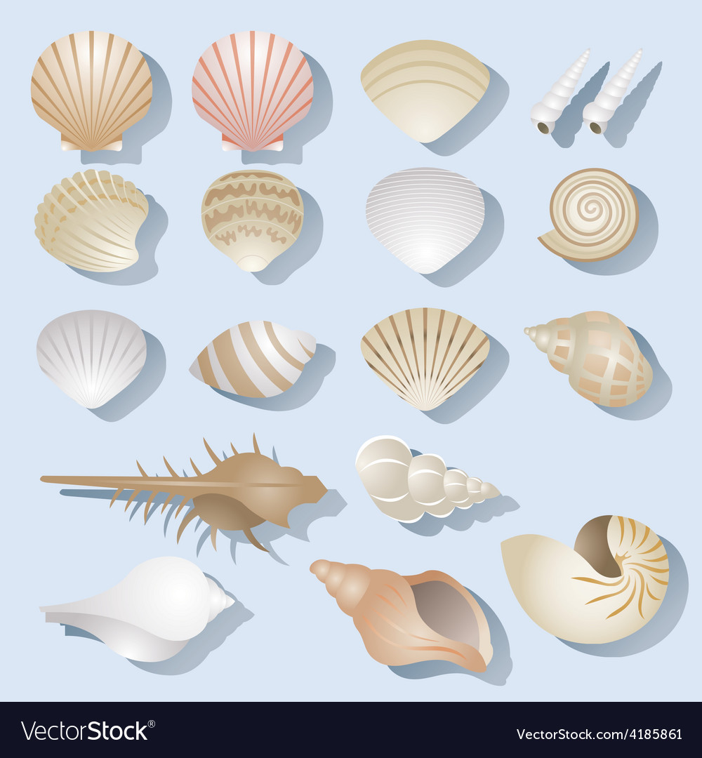 Sea shell objects set vector | Price: 3 Credit (USD $3)