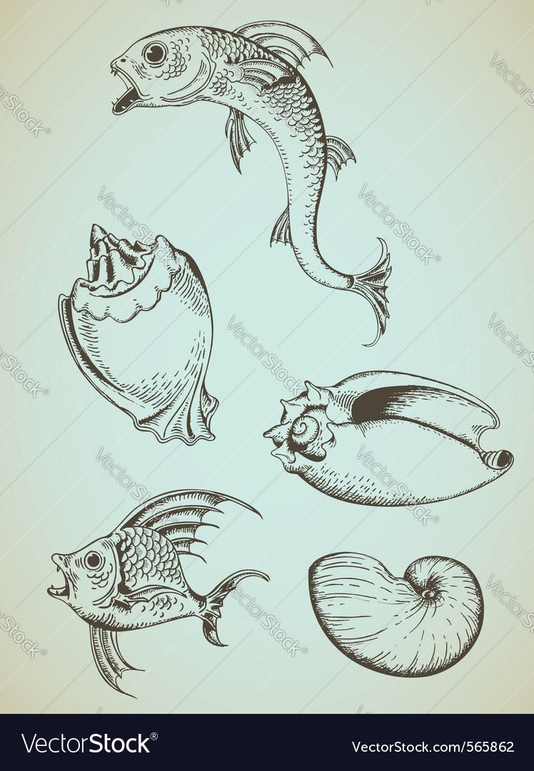 Fish and sea shells vector | Price: 1 Credit (USD $1)
