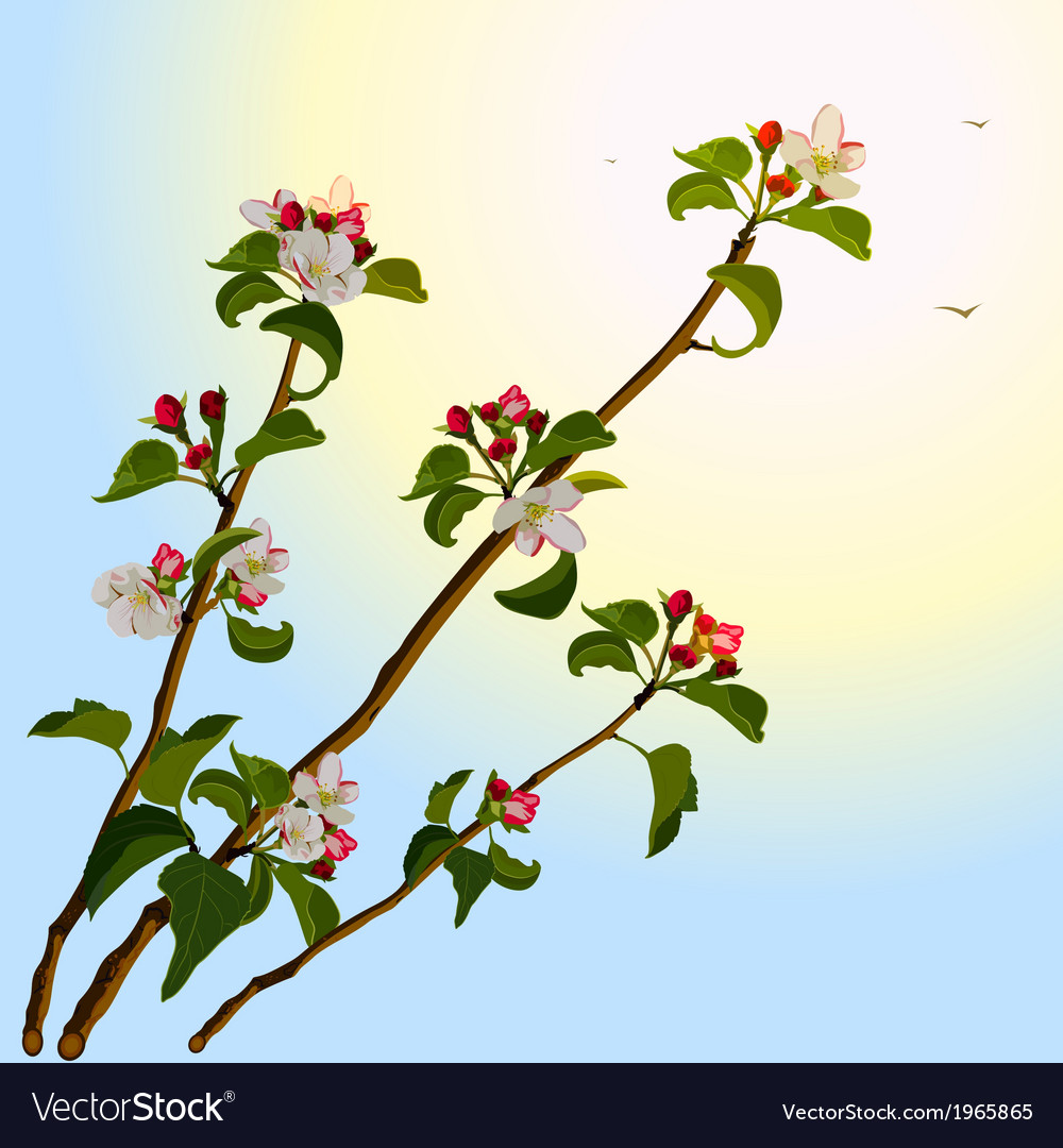 Branch apple tree with flowers vector | Price: 1 Credit (USD $1)