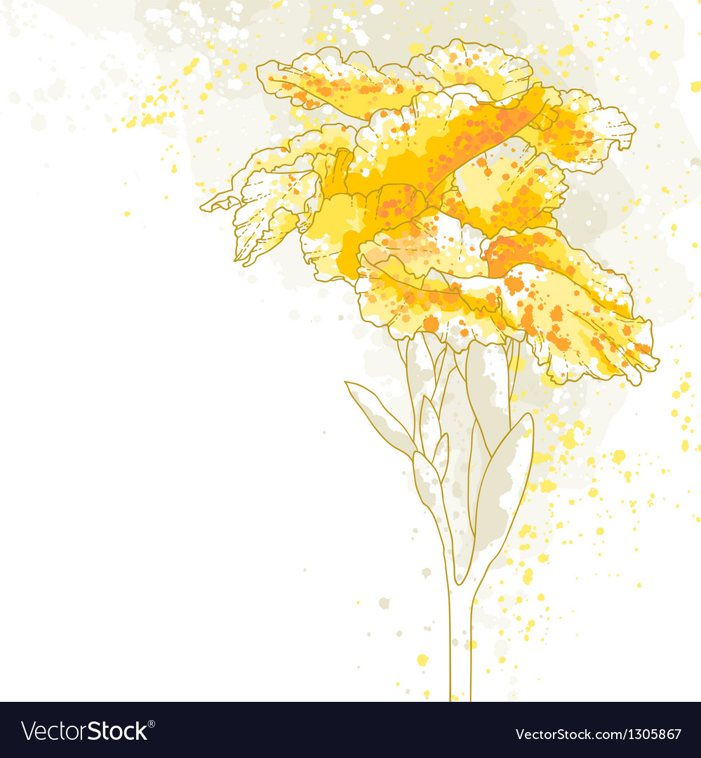 Canna flower on white background vector | Price: 1 Credit (USD $1)