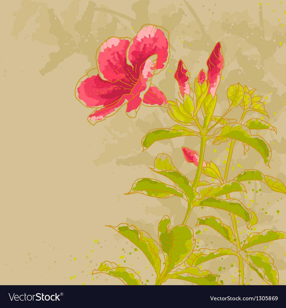 Allamanda flower on toned background vector | Price: 1 Credit (USD $1)