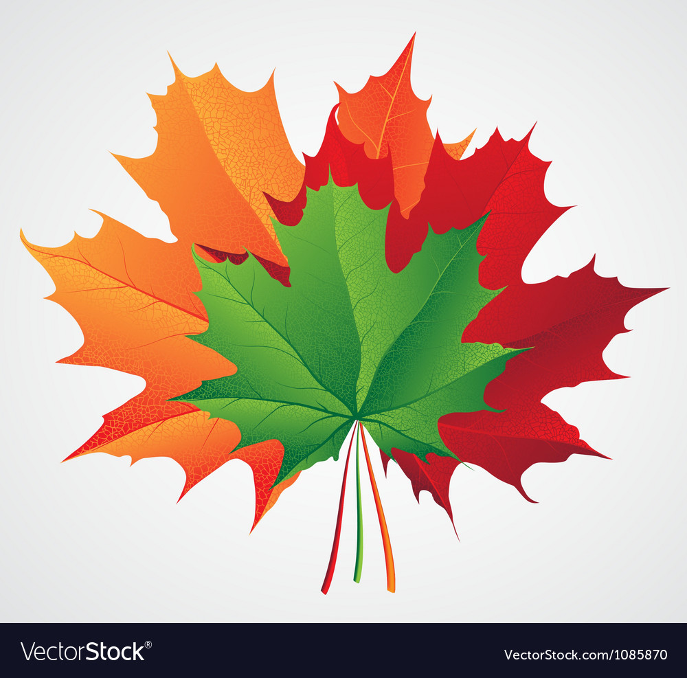 Autumn leaves seasonal background vector | Price: 1 Credit (USD $1)