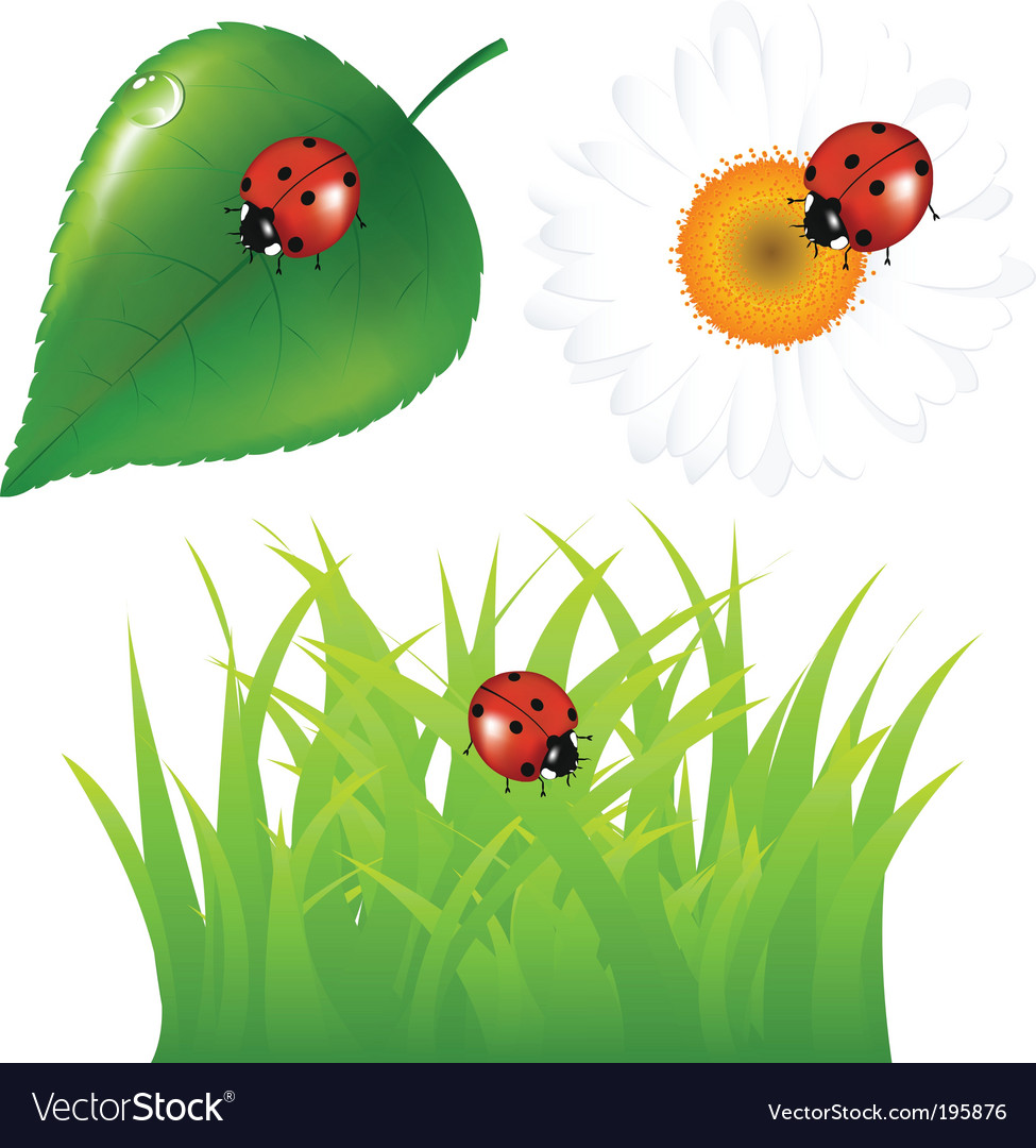 Ladybugs at home vector | Price: 1 Credit (USD $1)
