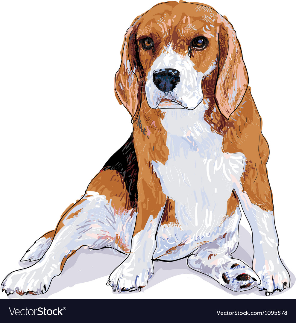 Beagle vector | Price: 3 Credit (USD $3)