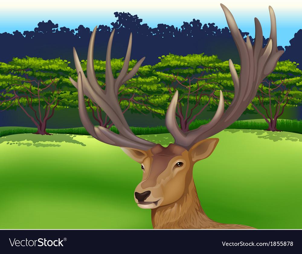Deer vector | Price: 3 Credit (USD $3)