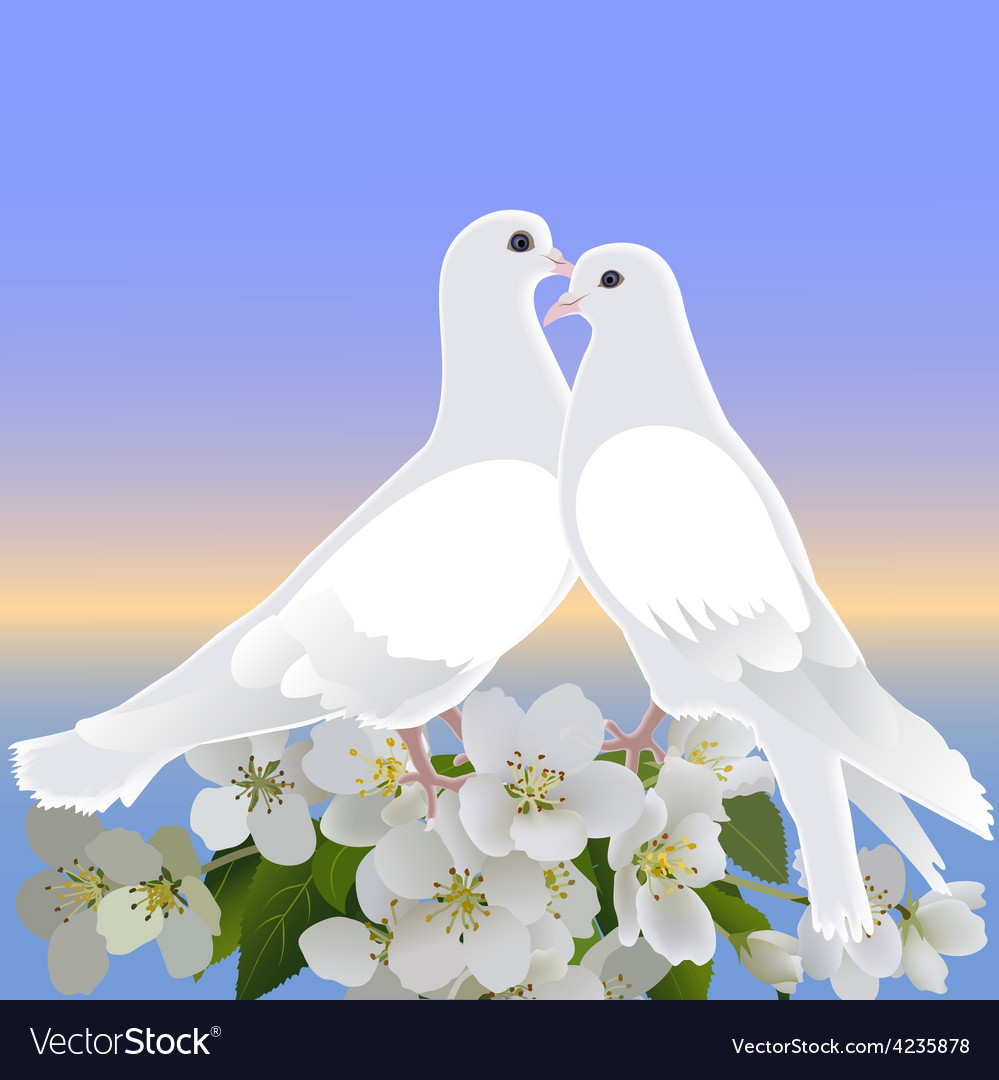 Two white doves and branch of blossoming apple tre vector | Price: 1 Credit (USD $1)