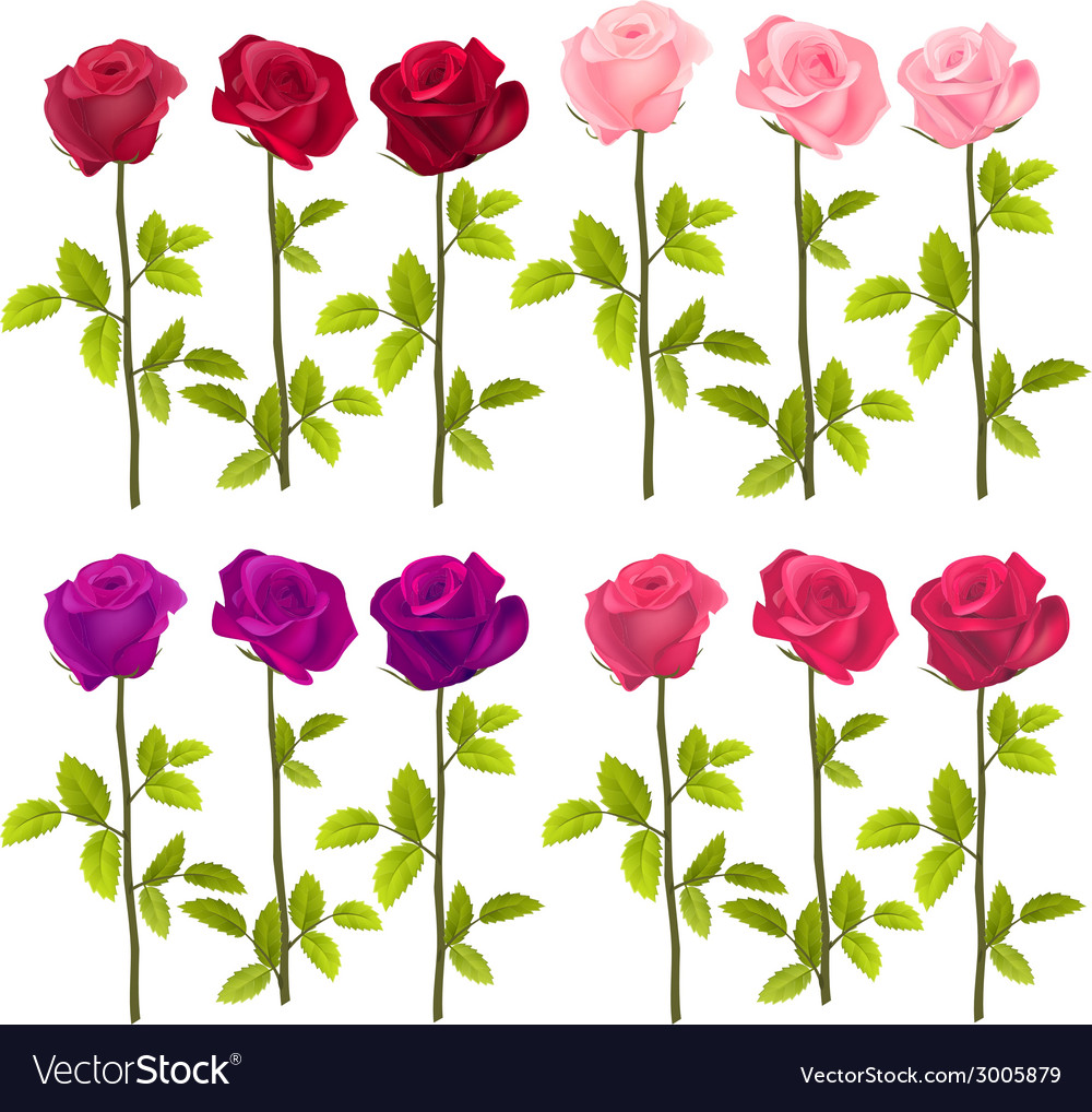 Realistic roses isolated on white vector | Price: 1 Credit (USD $1)