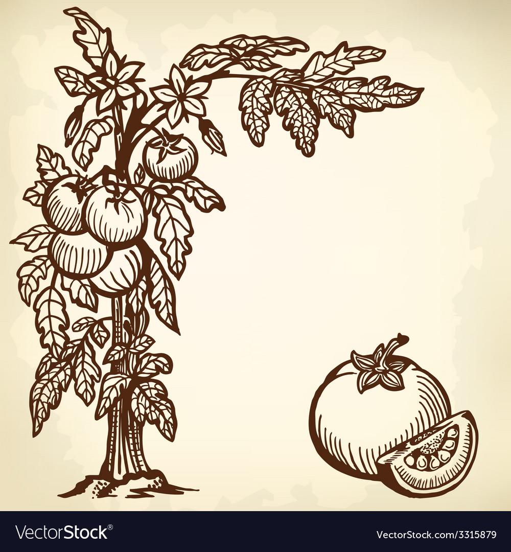 Tomato brunch vector   Price: 1 Credit (USD $1)