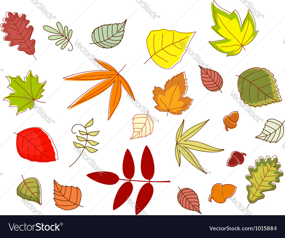 Autumnal colorful leaves set vector | Price: 1 Credit (USD $1)