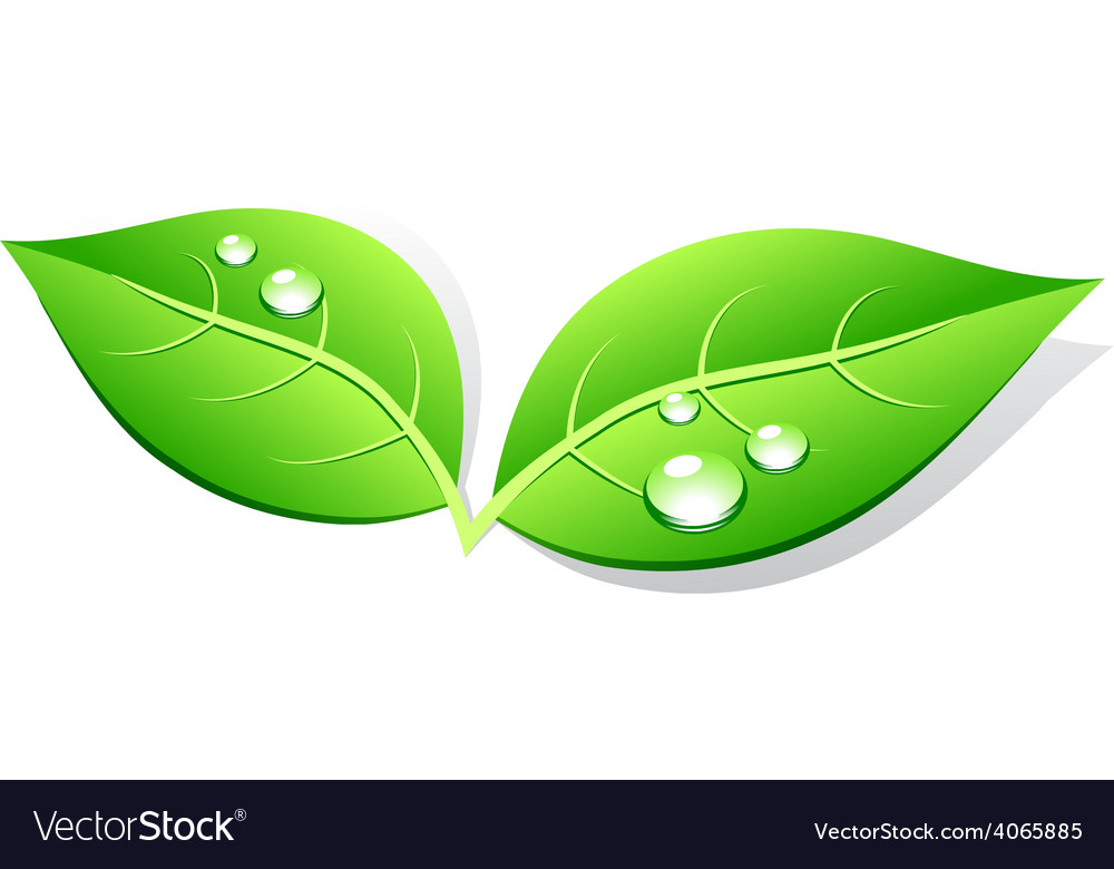 Leaves vector   Price: 1 Credit (USD $1)