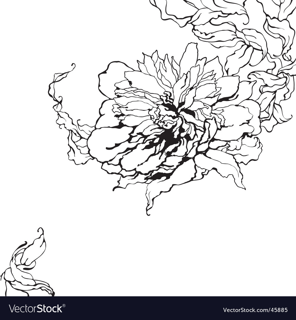 Peony sketch vector | Price: 1 Credit (USD $1)
