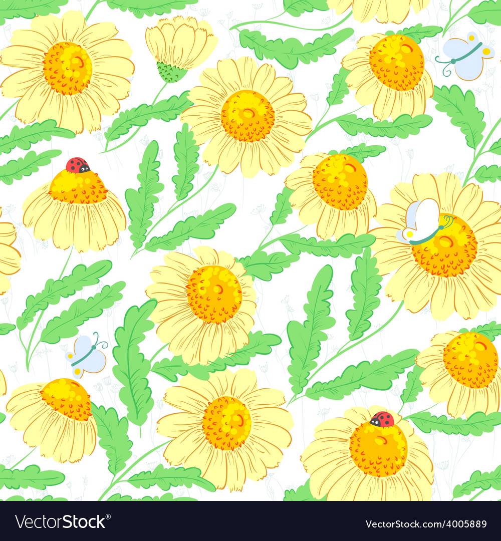Chamomile flowers vector | Price: 1 Credit (USD $1)