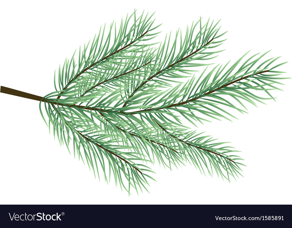 Fur-tree branch vector | Price: 1 Credit (USD $1)