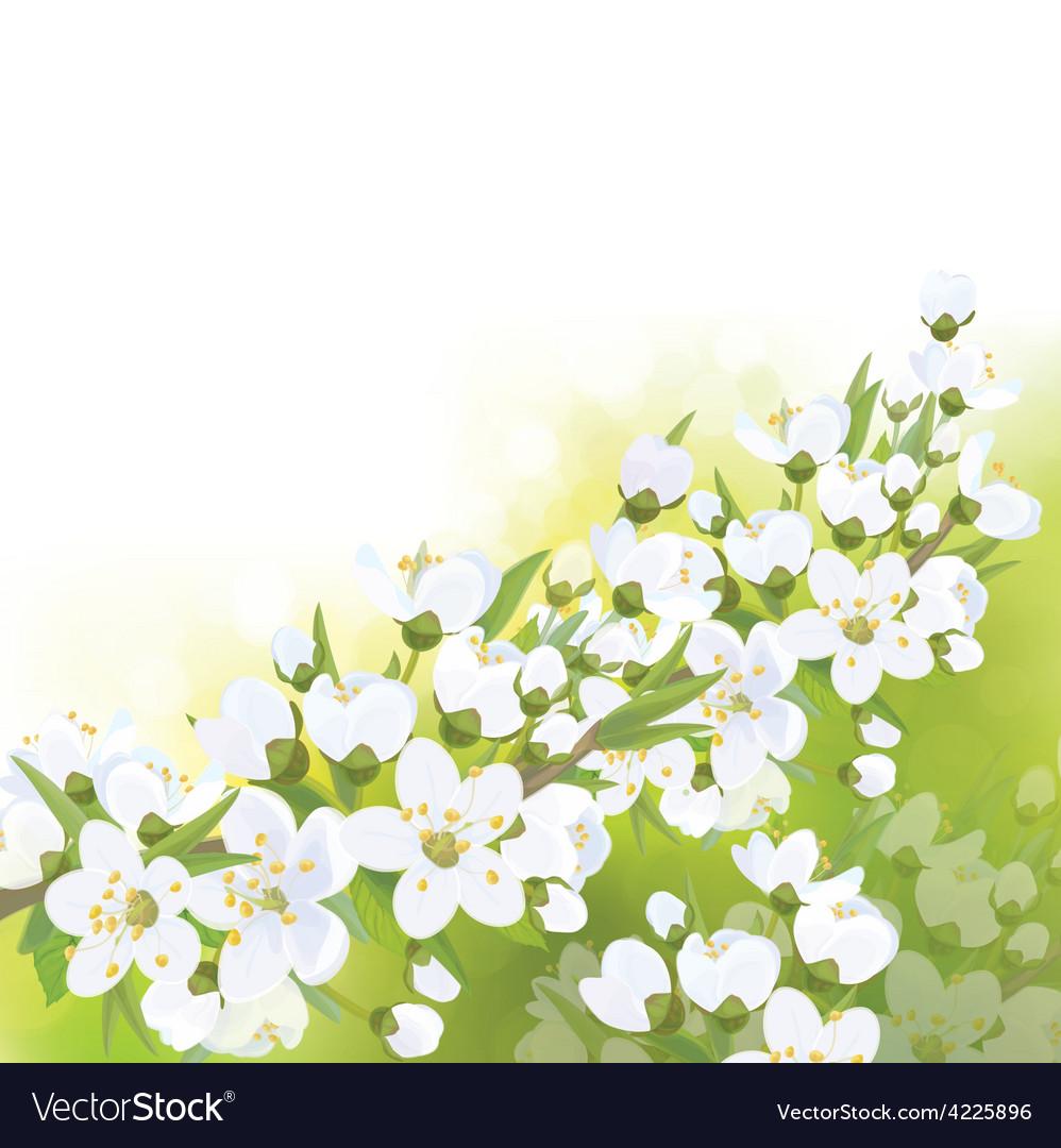 Spring blossom branch vector | Price: 1 Credit (USD $1)