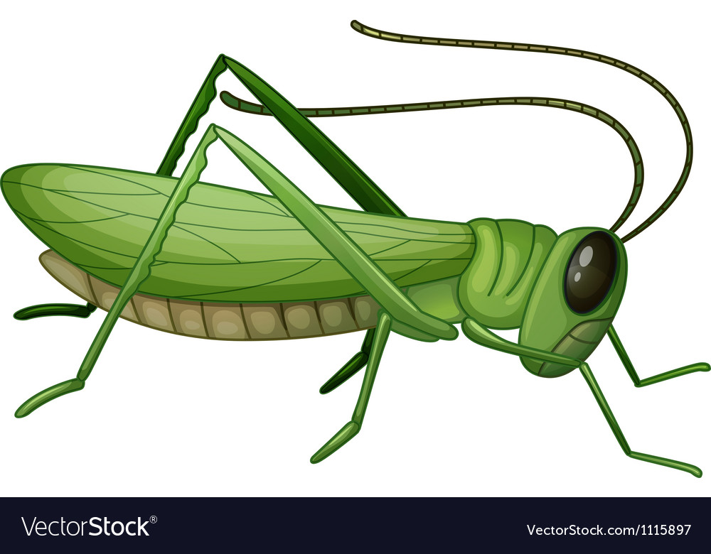 Grasshopper vector | Price: 1 Credit (USD $1)