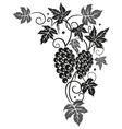 Vine grapes border vector
