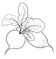 Radish with leaves contours vector