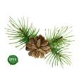 Watercolor pine branch with cone vector