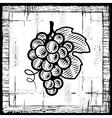 Retro grapes bunch black and white vector