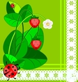 Lace strawberry and ladybug vector