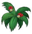 A plant with two ladybugs vector