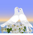 Two white doves and branch of blossoming apple tre vector