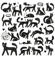 Cats - doodles set vector