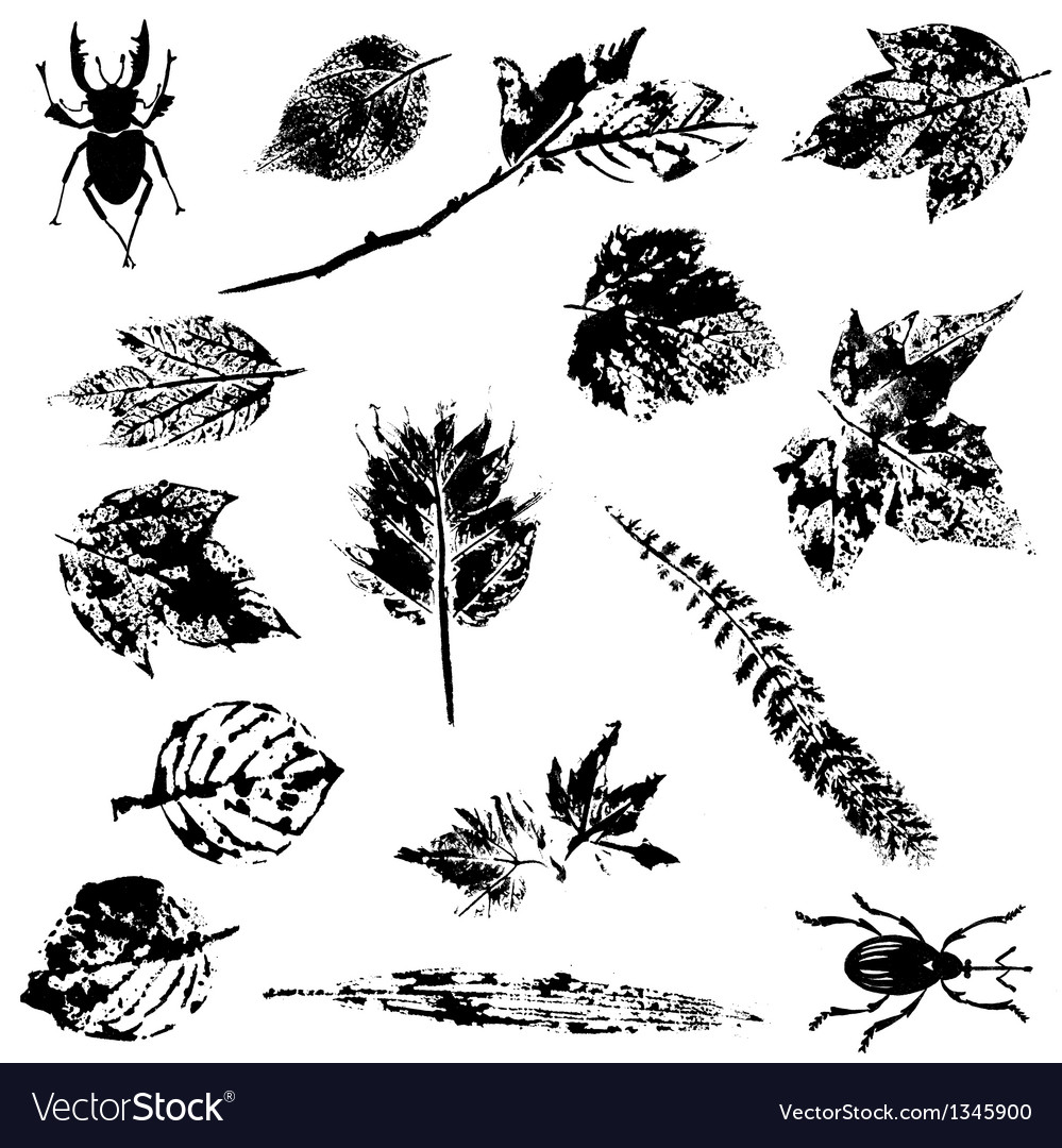 Set of nature grunge elements vector | Price: 1 Credit (USD $1)
