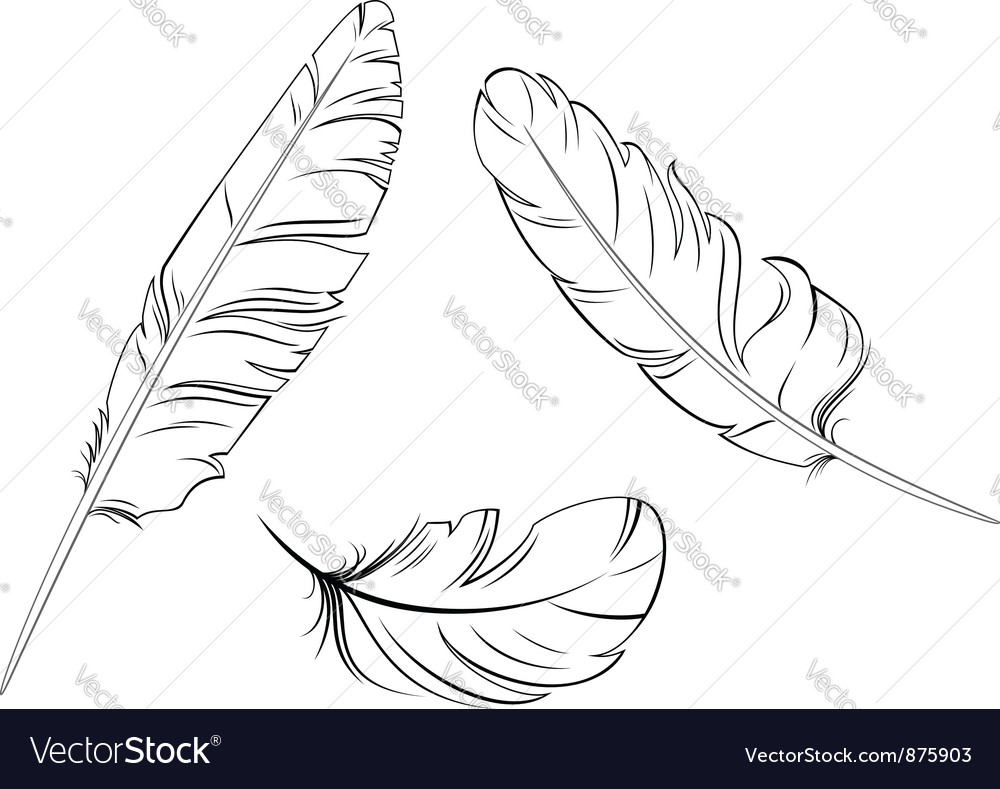 Set of bird feathers vector | Price: 1 Credit (USD $1)