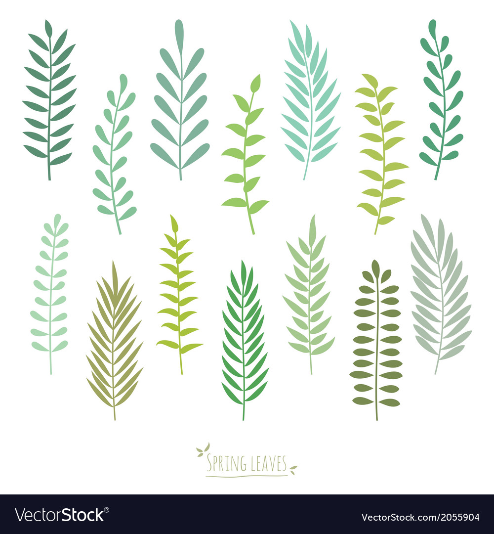 Set of spring green leaves vector | Price: 1 Credit (USD $1)