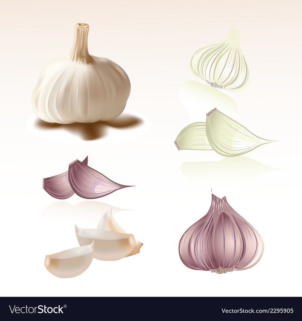 Set of garlic clipart symbol vector | Price: 1 Credit (USD $1)