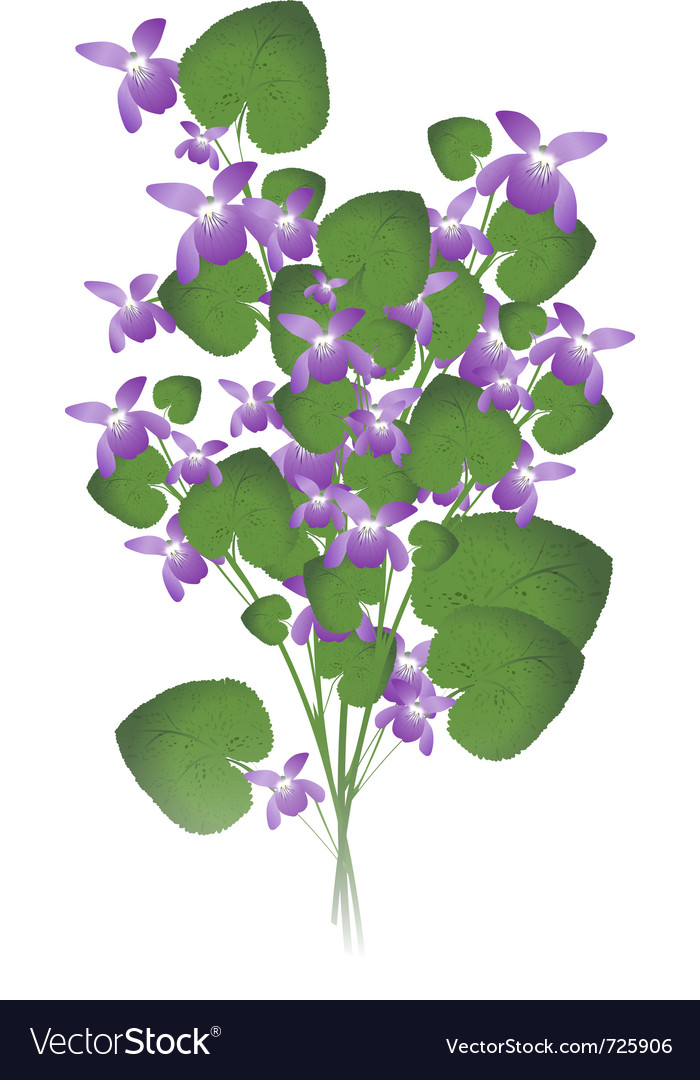 Bunch of wild violet vector | Price: 1 Credit (USD $1)