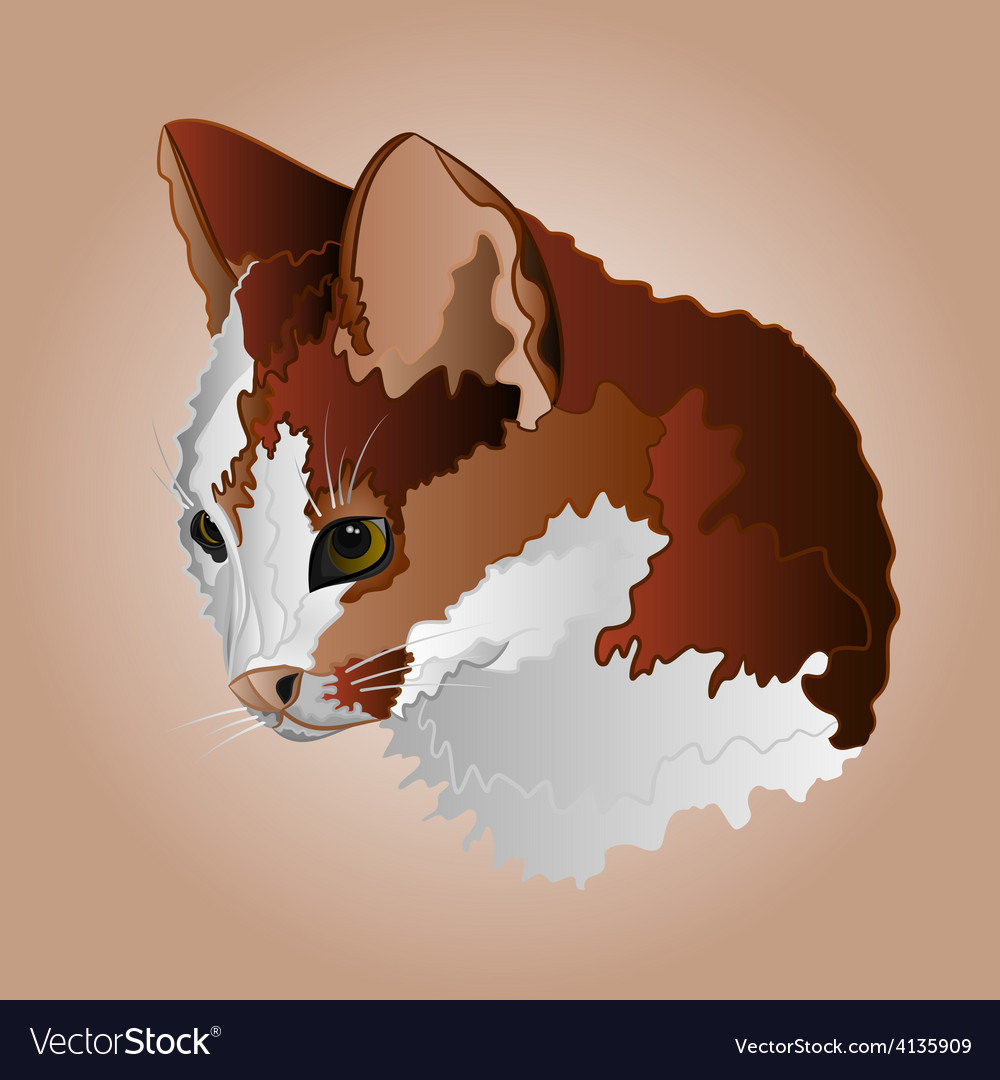 Kitty three color head pussy feline vector | Price: 1 Credit (USD $1)