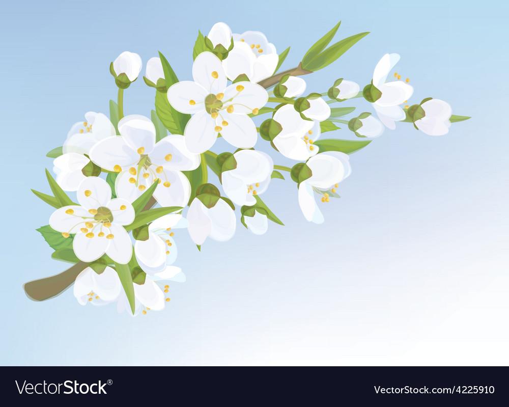 Blossom tree branch vector | Price: 1 Credit (USD $1)