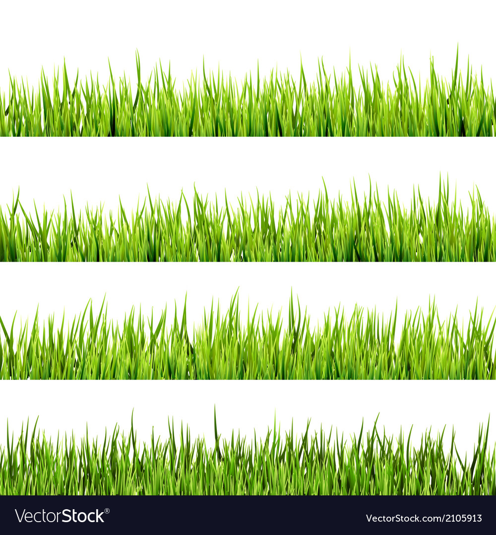 Fresh spring green grass isolated eps 10 vector | Price: 1 Credit (USD $1)